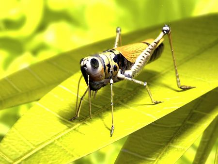 Macro Insects-29