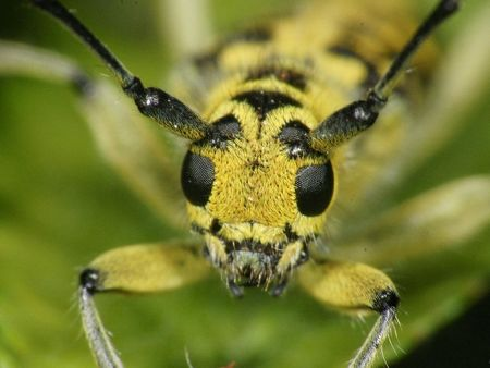 Macro Insects-21